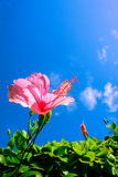 Pink flower. A pink flower in the sky Stock Photo