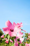 Pink flower on the sky background. Pink flower on the sky Royalty Free Stock Images