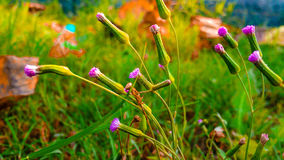 Pink flower. Pink small flower by nature Royalty Free Stock Image
