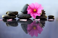 Black spa stones and pink cosmos flower. Royalty Free Stock Photo