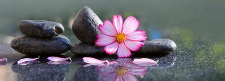 Black spa stones and pink cosmos flower on green. Stock Photography