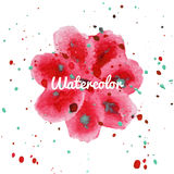 Pink flower splash watercolor hand drawn background Stock Photos