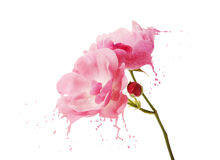 Pink flower splashes Royalty Free Stock Images