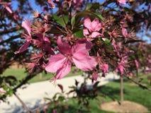 Pink Flower Springtime. Pretty Pink Flower Spring Stock Photos