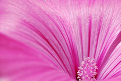 Pink flower, stamens and pollen Royalty Free Stock Photography
