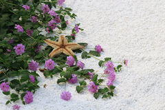 Pink flower and starfish on white sand background Stock Photos