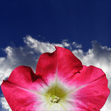 Pink Flower Stationery stock photo