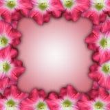 Pink Flower Stationery frame Stock Images