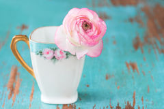 Pink Flower in teacup Royalty Free Stock Images