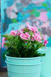 Pink flower in teal flower pot with copy space Royalty Free Stock Photography