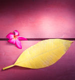 Pink flower of Temple Tree  or Pumeria with yellow leaf on wood Royalty Free Stock Image