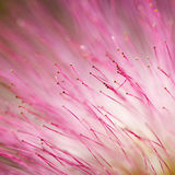 Pink flower texture Royalty Free Stock Image