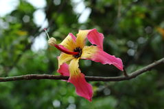 Pink Flower. A flower on the tree branch in a garden Stock Photography