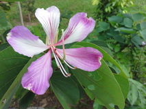 Pink flower on tree. In garden Stock Images