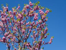 Pink flower on a tree stock photos