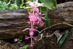 Pink flower and trunk Royalty Free Stock Photo