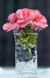 Pink Flower in Vase. Vibrant pink geranium in crackled vase with dark background Royalty Free Stock Photos