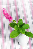 Pink flower in a vase. Beautiful pink flower in a vase Royalty Free Stock Image