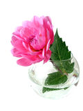 Pink flower in vase. Isolated on white background Royalty Free Stock Images