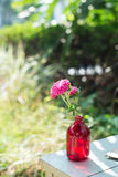 Pink flower in the vase. Pink chrysanthemum in the red glass vase Stock Images