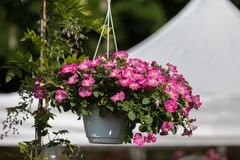 Pink Flower Vase Hanging in Countryside Setting.  Royalty Free Stock Photos