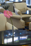 Pink flower in a vase. On a table in the hotel hall Stock Image