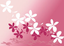 Pink flower vector design Royalty Free Stock Image