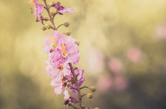 Pink flower vintage Stock Images