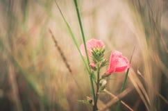 Pink flower vintage Stock Image