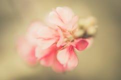 Pink flower vintage Royalty Free Stock Photo