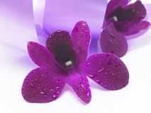 Pink flower in violet satin background Royalty Free Stock Photos