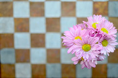 Pink flower on the wall Stock Photography