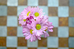Pink flower on the wall Stock Photo