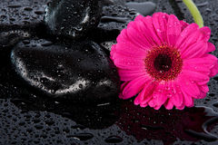 Pink flower on wet surface Royalty Free Stock Photo