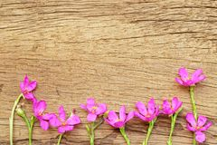 Pink flower on wood texture Stock Photos