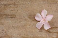 Pink flower on wooden background Royalty Free Stock Images