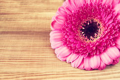 Pink flower on the wooden table. macro photo vintage filtered image Stock Photography