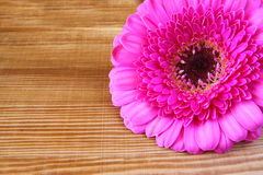 Pink flower on the wooden table. macro photo vintage filtered image Stock Images