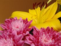Pink Flower - Yellow background Stock Photography