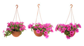 Pink flowering stock photography