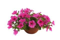 Pink flowering stock photos