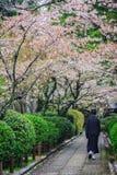 Pink flowering sakura Stock Photography