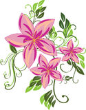 Pink flowers. The  illustration contains the image of pink flowers Royalty Free Stock Photography