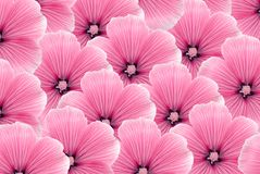 Pink flowers Royalty Free Stock Photography
