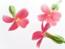 Free Pink Flowers Stock Photos - 18360063