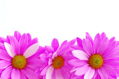 Free Pink Flowers Stock Images - 1939074