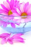 Pink flowers Stock Photos