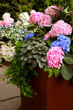 Pink Flowers. Beautiful arrangement of bright and colorful flowers of pinks and blues mixed with different variety of plants in a rusty-colored container Stock Image
