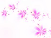 Pink flowers. On a white background Royalty Free Stock Photography