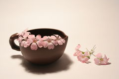 Pink flowers. In cup, japanese style Stock Images